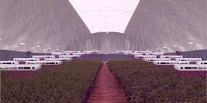 Indoor Agriculture Vertical Farms